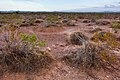East of the Black Range - Flickr - aspidoscelis (7).jpg