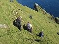 Eastern side of Boreray - geograph.org.uk - 1440437.jpg
