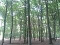Ede - 2013 - panoramio (13).jpg