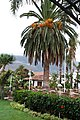 El Durazno, Santa Cruz de Tenerife, Spain - panoramio (6).jpg