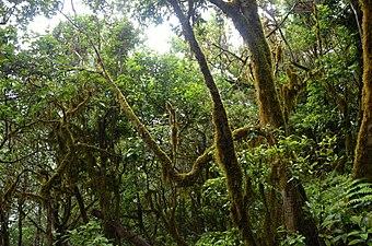 El Pijaral - Bosque encantado3.jpg