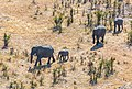 Elefantes africanos de sabana (Loxodonta africana), vista aérea del delta del Okavango, Botsuana, 2018-08-01, DD 36.jpg