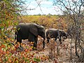 Elephants autumn colors.jpg