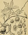 Emergency food plants and poisonous plants of the islands of the Pacific (1943) (20665840274).jpg