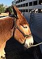 Equestfest (16346890749).jpg