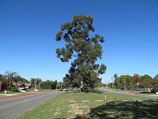 Erindale Road road in Perth, Western Australia