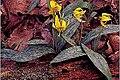 Erythronium americanum 11zz.jpg