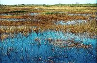 Everglades57(js).jpg