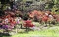 Exbury Gardens - geograph.org.uk - 779034.jpg