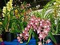 Exposição Nacional de Orquídeas de Catanduva no Colégio Nossa Senhora do Calvário - Colegião - panoramio (3).jpg