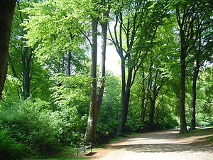 Fælledparken - Fælledparken in May.