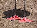 Füße eines Chile-Flamingo Zoo Landau.JPG