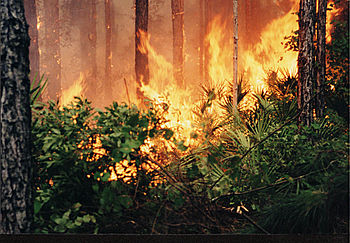 English: 6/98 -- Forest fires resulted from ex...