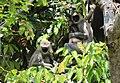 FLora and fauna of Chinnar WLS Kerala (65).jpg