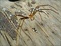 Fake Spider (1860714381).jpg