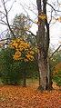 Fall - panoramio (14).jpg