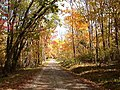 Fall Trees aglow - panoramio.jpg