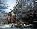 Fallen tree - Q Street - Blizzard of 2010.JPG
