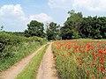Farm track with poppy field. - geograph.org.uk - 501419.jpg