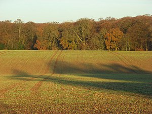 Eye and Dunsden - Farmland and woodland in the parish of Eye and Dunsden