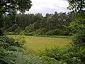 Field at Savary - geograph.org.uk - 512845.jpg