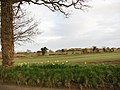 Field beside Stratton Road - geograph.org.uk - 728068.jpg
