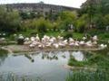 Flamingosgehege Basel.jpg