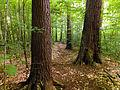 Flickr - Nicholas T - Tionesta Scenic Area (5).jpg