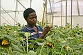 Flickr - usaid.africa - Uganda flowers.jpg