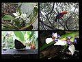 Flora y fauna de Altamira.jpg