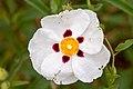 Flower 20140511 03.jpg