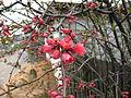 Flower 59 (6993788465).jpg