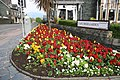 Flower bed - geograph.org.uk - 1273039.jpg