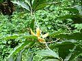 Flower of a tree.jpg