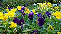 Flower show in Botanical Garden, Ooty 02.jpg