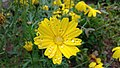 Flowermorning.jpg