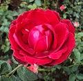 Flowers - Uncategorised Garden plants 285.JPG