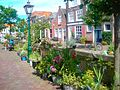 Flowers and canals, Holland.jpg
