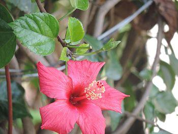 Flowers of india.jpg