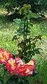 Flowery Hope.jpg