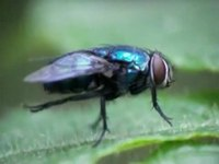 File:Fly cleaning.ogv