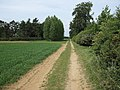 Footpath past windbreak - geograph.org.uk - 1318469.jpg