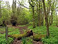 Footpath through Boardhouse Plantation - geograph.org.uk - 5629.jpg