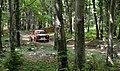 Ford Escort RS Rally Mark 2 (27756459270).jpg