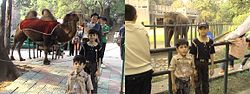 Foreigners at Nanjing Zoo.JPG