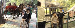 Nanjing Hongshan Forest Zoo - Image: Foreigners at Nanjing Zoo