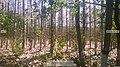 Forest, Ngawi Regency, East Java, Indonesia.jpg