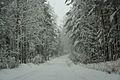 Forest near Ob river in Altai Region 31.JPG