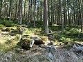 Forest near the Große Bode 16.jpg