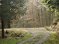 Forestry road in Troston Forest - geograph.org.uk - 691377.jpg